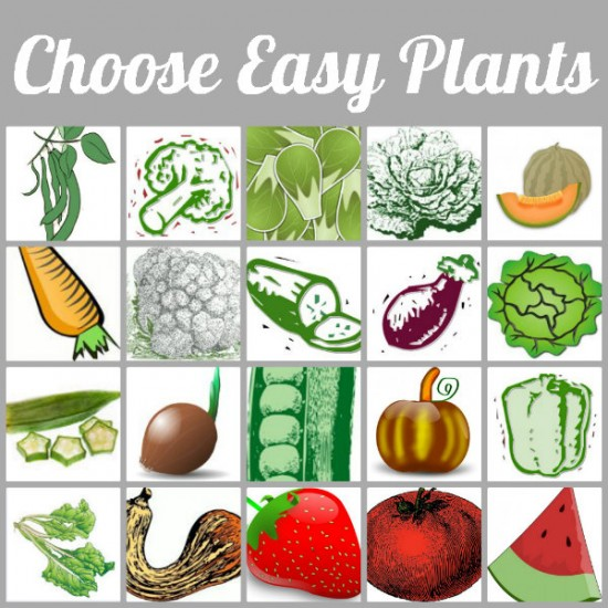 choose-easy-plants